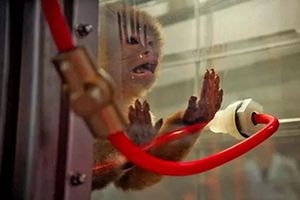 丧心病狂!大众居然用猴子测柴油车尾气!